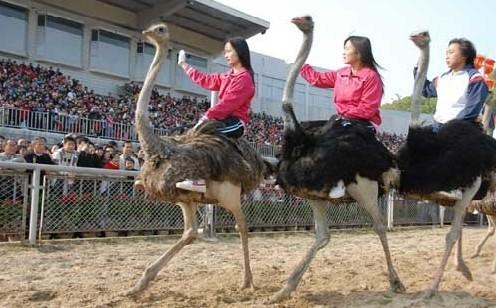 深圳西丽野生动物园最便宜的门票是多少